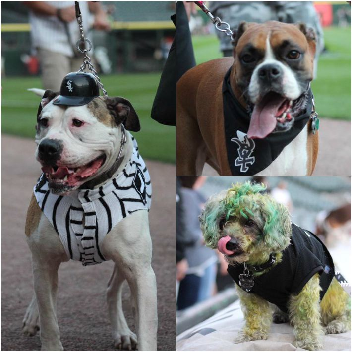 2015 Chicago White Sox Bark In The Park