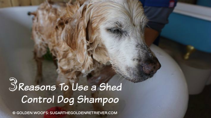 3 Reasons To Use a Shed Control Dog Shampoo