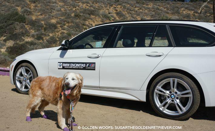 BMW White Wagon