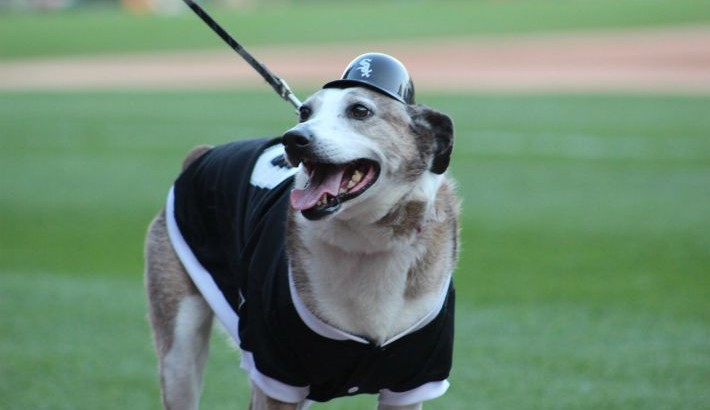 Chicago White Sox 2015 Bark At The Park