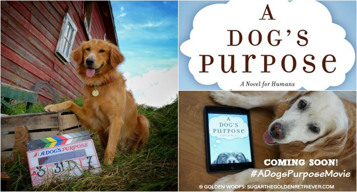 A Dog S Purpose Bailey S Story Full