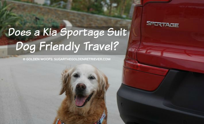 Does a Kia Sportage Suit Dog Friendly Travel? #DriveKia