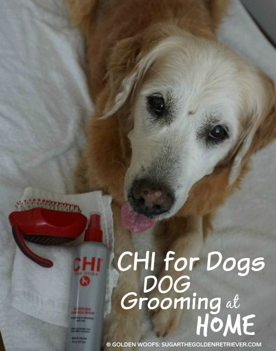 Dog Grooming at Home CHI for Dogs