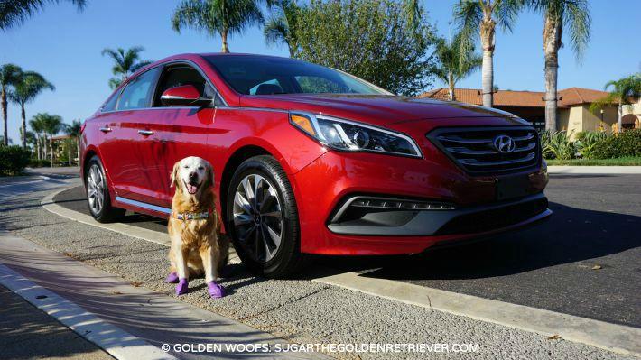 DriveHyundai at dog friendly Sheraton Carlsbad