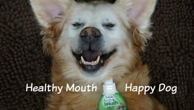 Remedy for Dog Bad Breath #TropiCleanFresh Breath Drops