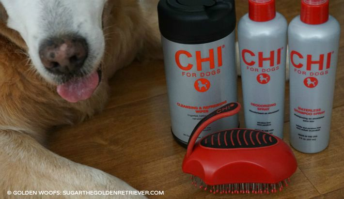 Home Dog Grooming from CHI for Dogs