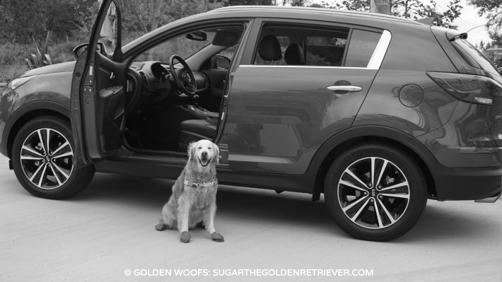 Kia Sportage dog friendly KiaPet