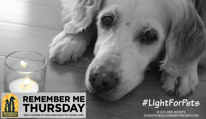 #LightForPets Remember Me Thursday