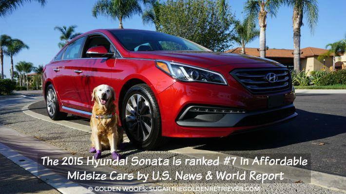 dog friendly car hyundai sonata sport drivehyundai golden woofs. Black Bedroom Furniture Sets. Home Design Ideas