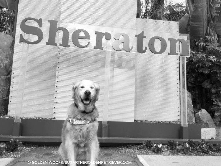 dog friendly Sheraton