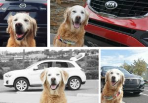 dog friendly car review