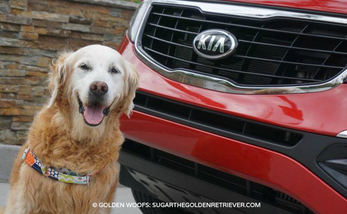 dog friendly travel Kia Motors Sportage Review