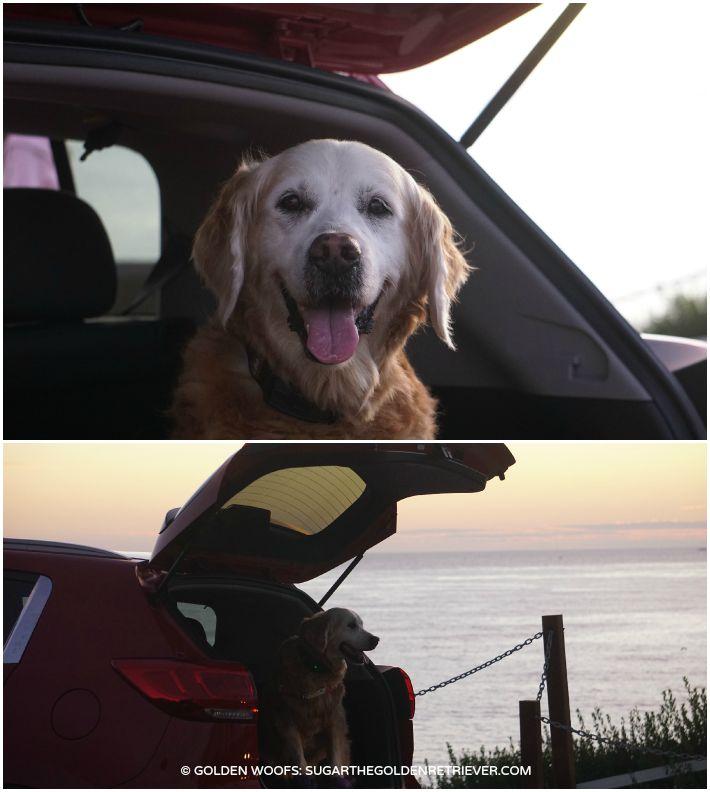 dog friendly travel w_ Kia Sportage