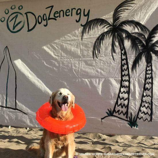 dogzenergy surf a thon