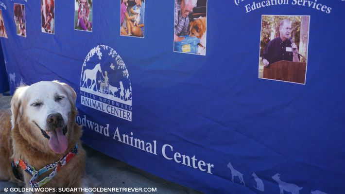 helen woodward animal canter surf a thon