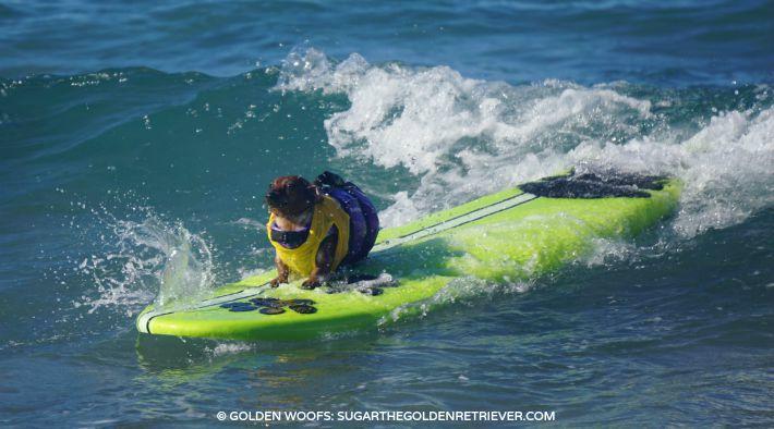 surf a thon HWAC coppertone surf dog
