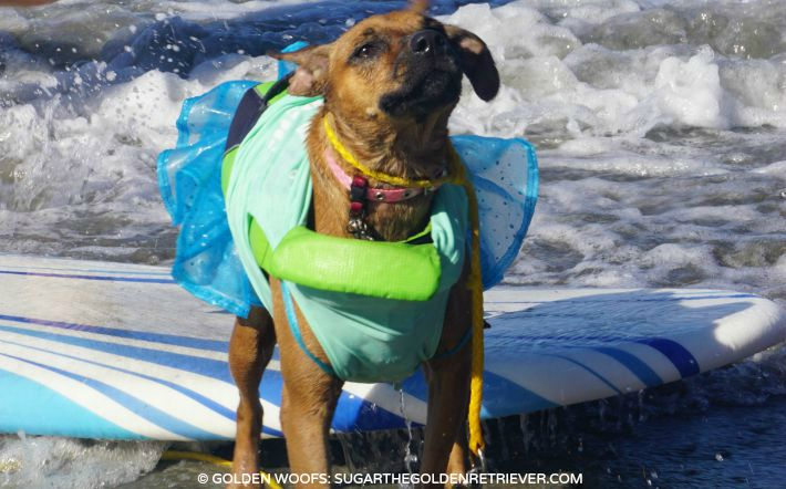 surf a thon HWAC gissele surf dog