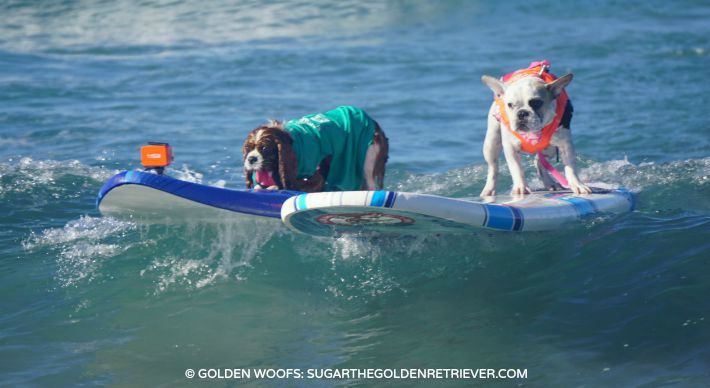 surf a thon helen woodward animal center surf dogs