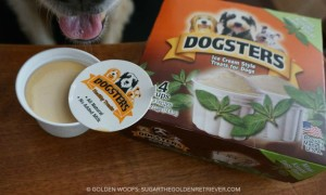 dogsters ice cream for dogs