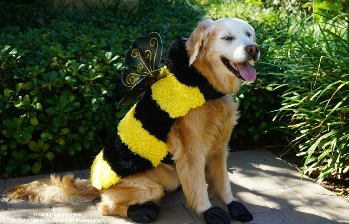 BEE Halloween Dog Costume