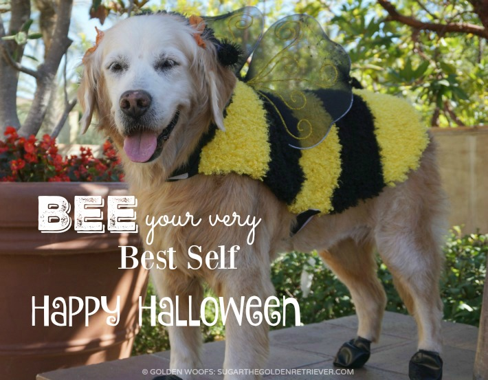 Halloween Dog BEE Costume