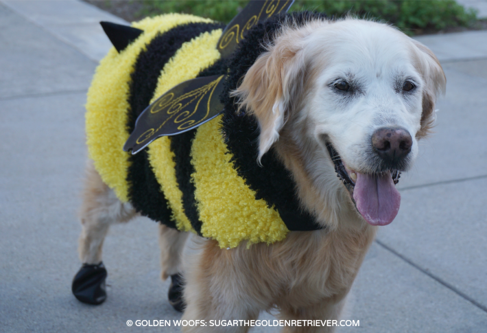 golden bee dog costume