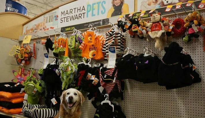 Martha Stewart Pets Halloween Collection