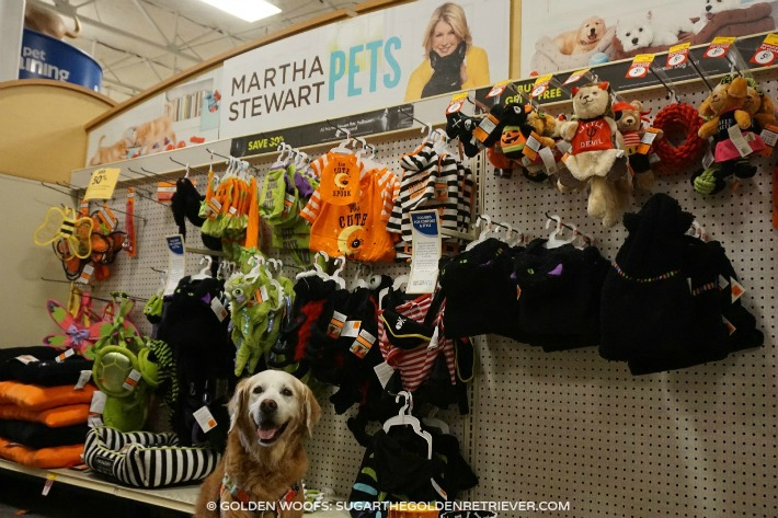 Martha Stewart Pets Halloween Collection