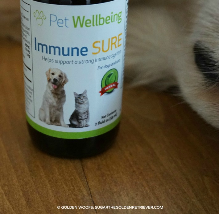 Can I Give My Dog Human Zinc Supplements