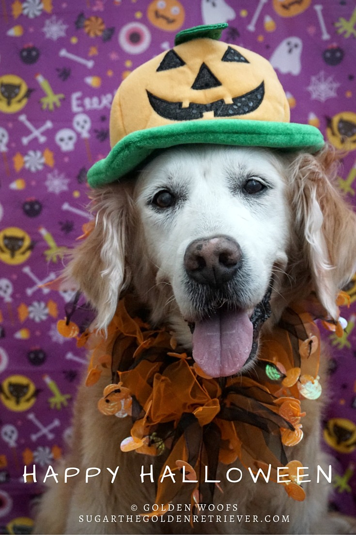 pumpkin popular pet costume for halloween 2017 - golden woofs