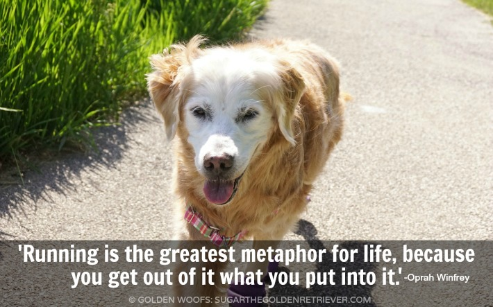 5k With Your Dog - Running Quote