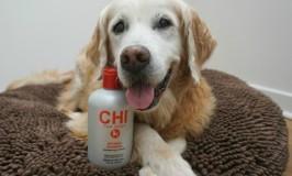 Salon Quality Dog Shampoo #CHIforDogs