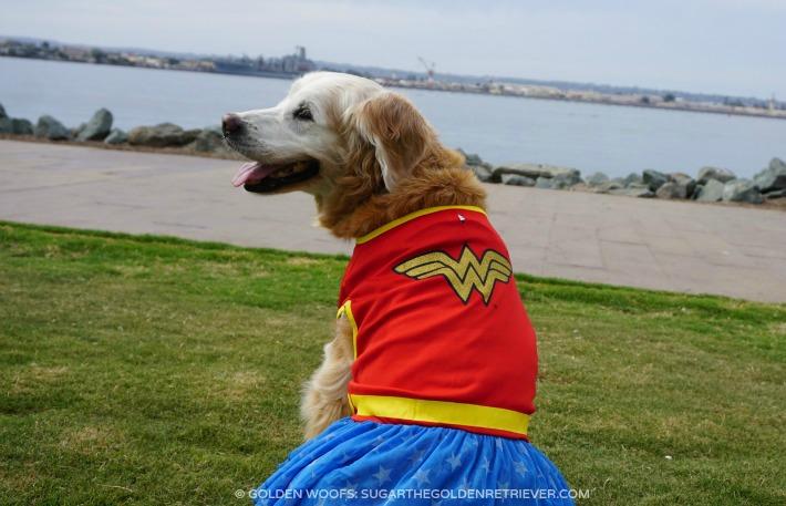 DC Comics Wonder Woman Halloween Dog Costume