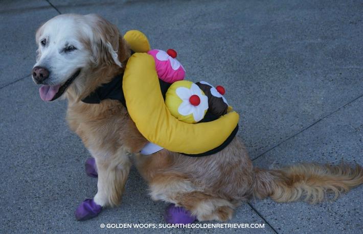 banana split dog costume