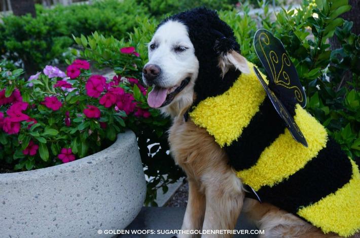 PetSmart Bee Dog Costume