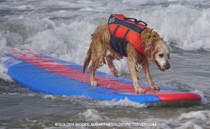 dog surfing dog's wild side