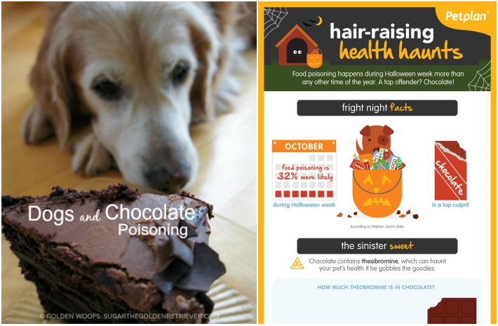 Dogs and Chocolate Poisoning