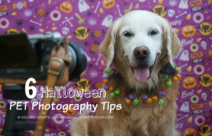 6 Halloween Pet Photography Tips