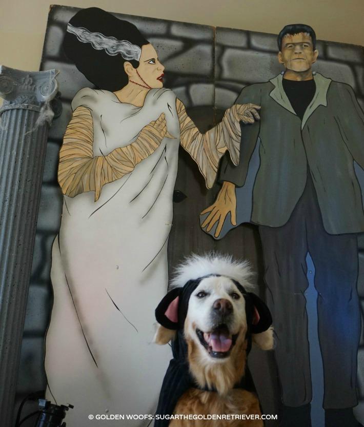 happy dog skunk dog costume