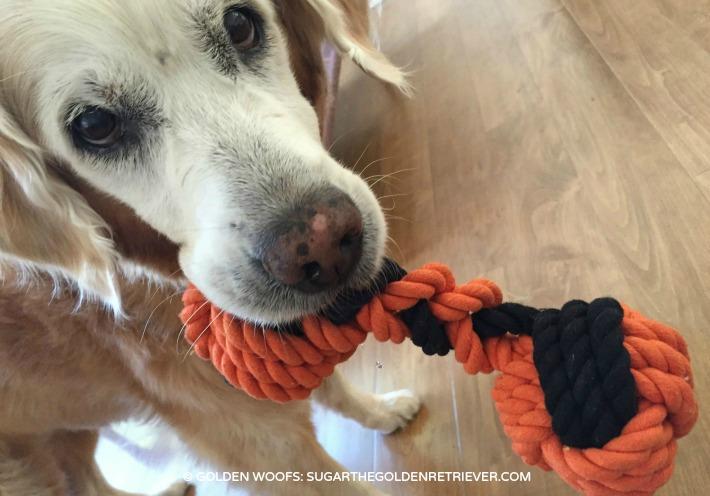 martha stewart how to make a dog bed