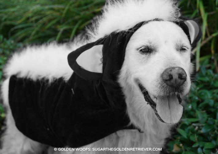 PetSmart skunk dog costume
