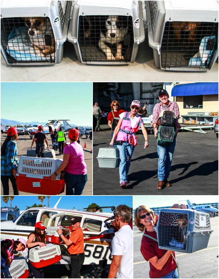 Holiday Airlift Shelter Pets