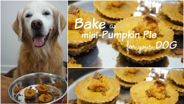 Pumpkin Pie for your dog