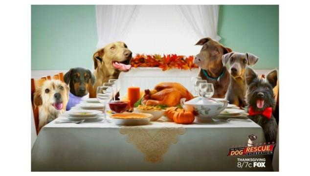 The All Star Dog Rescue Celebration