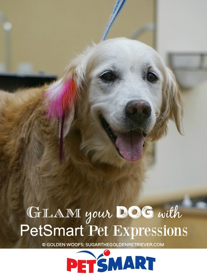 Glam Your Dog Pet Expressions by PetSmart