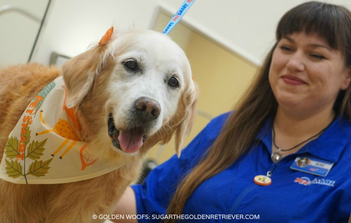 Get Your Dog Pampered At Petsmartgrooming Golden Woofs