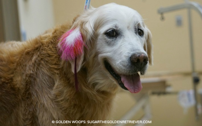 PetSmart Pet Expressions Feather & Fur Exptensions