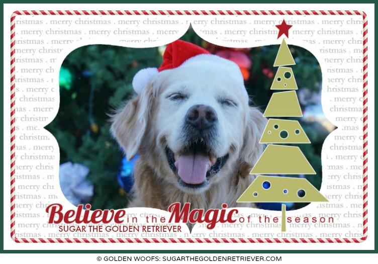 believe in the Magic of the season