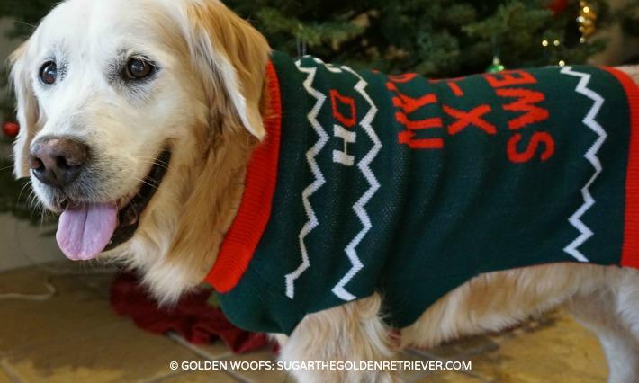 Golden Retriever Sweater