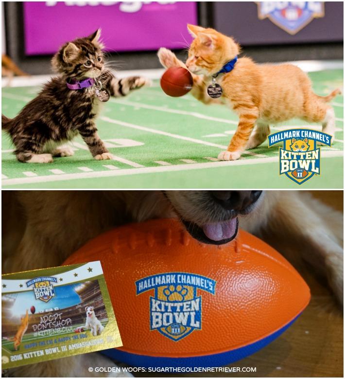 Hallmark Channel Kitten Bowl
